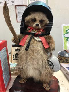 可愛い狸の剥製がゲレンデのフロントにありました。の写真・画像素材[1768697]