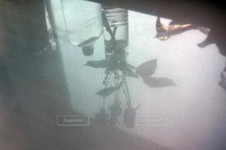 花瓶の影の写真・画像素材[1744216]