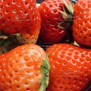 新鮮な朝摘みいちごのアップの写真・画像素材[1853472]