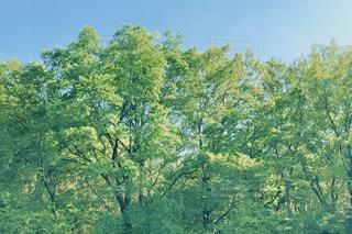 新緑の写真・画像素材[2107094]