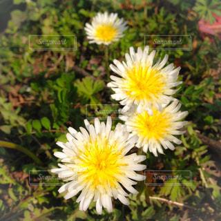 春の花の写真・画像素材[1750742]