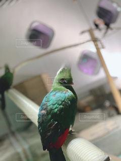 人馴れ の 鳥。の写真・画像素材[1745786]
