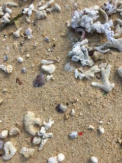 サンゴ混じりの砂浜の写真・画像素材[1747885]