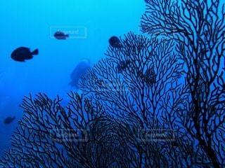 海の写真・画像素材[71582]
