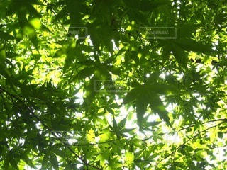 自然の写真・画像素材[61402]