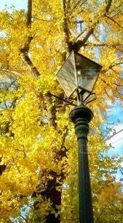 秋の写真・画像素材[61510]