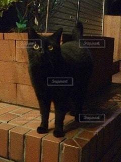 猫の写真・画像素材[69298]