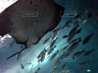 魚の写真・画像素材[83099]
