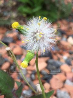 花の写真・画像素材[425149]