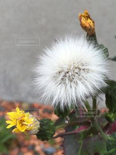 花の写真・画像素材[425151]