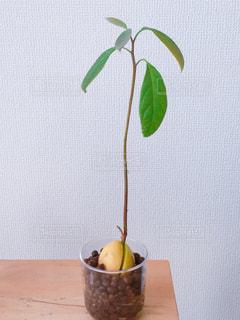 観葉植物の写真・画像素材[1205920]