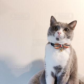 猫の写真・画像素材[1747235]