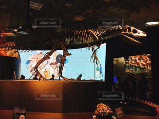 ティラノサウルスの化石の写真・画像素材[1747756]