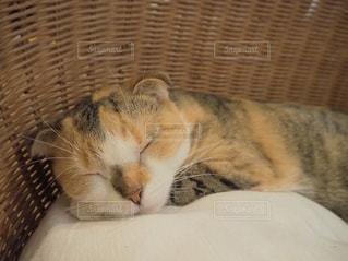 かごの中で眠っている猫の写真・画像素材[1753279]