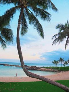 ハワイの海とヤシの木の写真・画像素材[1826982]