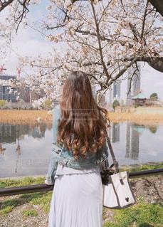 桜と後ろ姿の人の写真・画像素材[1830065]