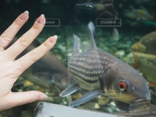 植物園の大きな魚と手の写真・画像素材[1835903]