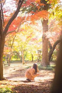 落ち葉を拾う女性の写真・画像素材[4161274]