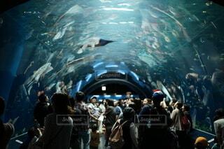 水族館の写真・画像素材[4161290]