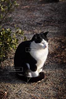 日向ぼっこしながら遠い目をする猫の写真・画像素材[1749573]