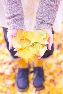 掌いっぱいの秋の写真・画像素材[254956]