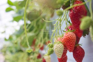 果物の一部の写真・画像素材[813758]