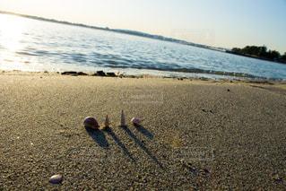 水の体の近くのビーチに立っている鳥の写真・画像素材[813762]