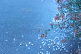 近くの花のアップの写真・画像素材[813783]