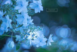 近くの花のアップの写真・画像素材[813784]