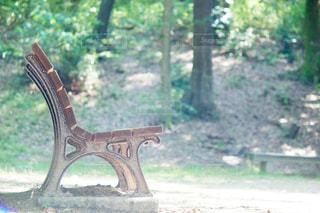 公園のベンチに座っている鳥の写真・画像素材[813789]