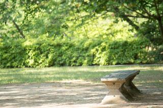 公園の木の写真・画像素材[813793]