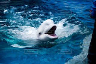 水面下を泳ぐ魚たちの写真・画像素材[813802]