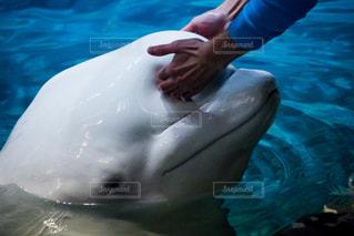 水面下を泳ぐ魚たちの写真・画像素材[813805]