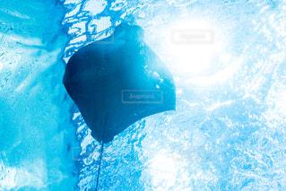 水面下を泳ぐ魚たちの写真・画像素材[813813]