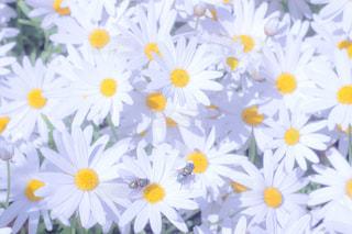 近くに黄色い花のアップの写真・画像素材[813829]
