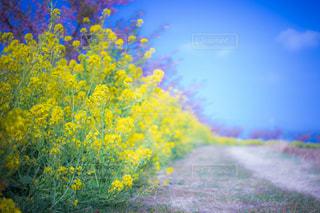 黄色の花の写真・画像素材[813835]