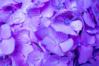 紫の花のグループ - No.814129
