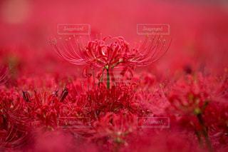 近くの花のアップの写真・画像素材[814829]