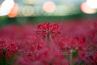 近くの花のアップの写真・画像素材[814833]