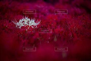 近くの花のアップ - No.814836