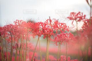 近くの植物のアップの写真・画像素材[814838]