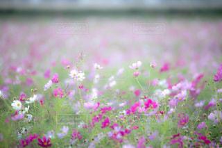 近くの花のアップの写真・画像素材[814844]