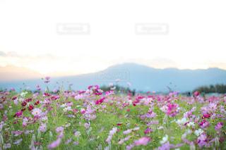 近くの花のアップ - No.814845