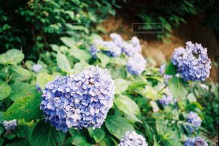 近くのフラワー ガーデン - No.898794
