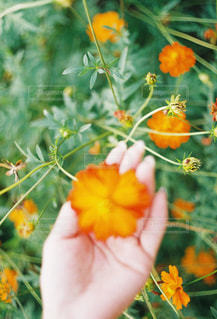 オレンジ色の花と鳥 - No.898809