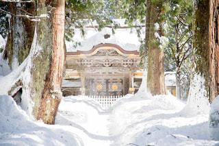 木の隣に雪の山の写真・画像素材[985550]