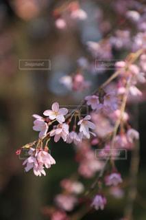近くの花のアップの写真・画像素材[1805406]