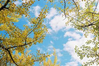 秋晴れの写真・画像素材[1752746]