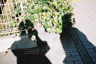 陽陰の写真・画像素材[1752751]