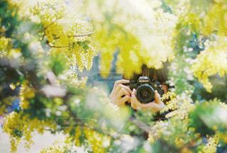 捕まえる春の写真・画像素材[1853016]